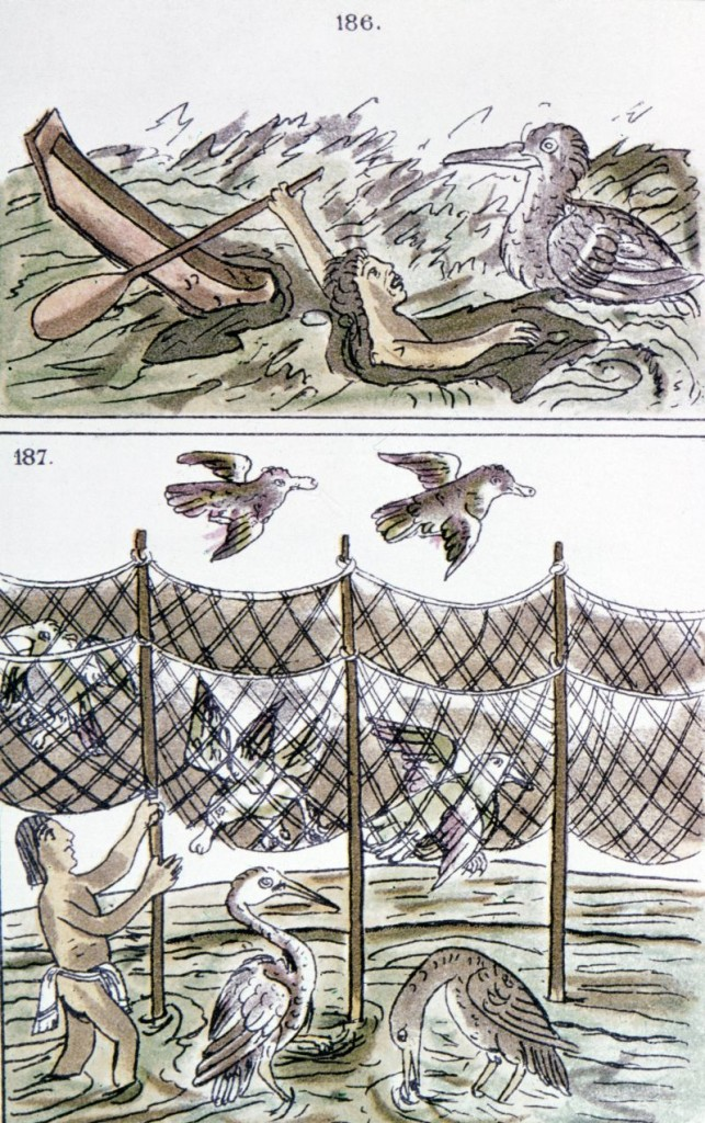 AZTEC FISHERMEN. Top: An Aztec fisherman drowning. Bottom: An Aztec man fishing with nets. Drawing from the Codex Florentino, c1540, a treatise compiled by Bernardino de Sahagun (1499-1590) on the Aztecs and the Spanish conquest of Mexico.