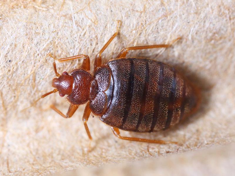 conocer, plagas insectos, xlsemanal (7)