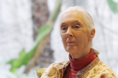 "Primatologist Jane Goodall attends a news conference to relaunch the Jane Goodall Institute Spain's campaign ""Speak Out in the jungle"" at the Mobile World Congress in La Casa de Libro, Barcelona February 15, 2013. The campaign, which encourages the public to recycle old mobile phones, aims to raise awareness about the social and environmental impact on communities in the Congo Basin caused by the demand for certain minerals in the region that are used in mobile technology, according to the institute's press release. REUTERS/Gustau Nacarino (SPAIN - Tags: ENTERTAINMENT SOCIETY ENVIRONMENT SCIENCE TECHNOLOGY BUSINESS)CODE: X00435"