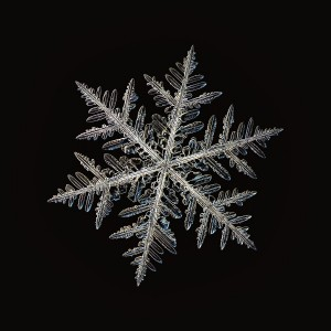Real snowflake photo (large stellar dendrite crystal), isolated