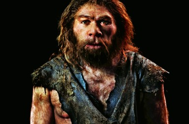 Neanderthal model. Reconstruction of a Neanderthal (Homo neanderthalensis) based on the