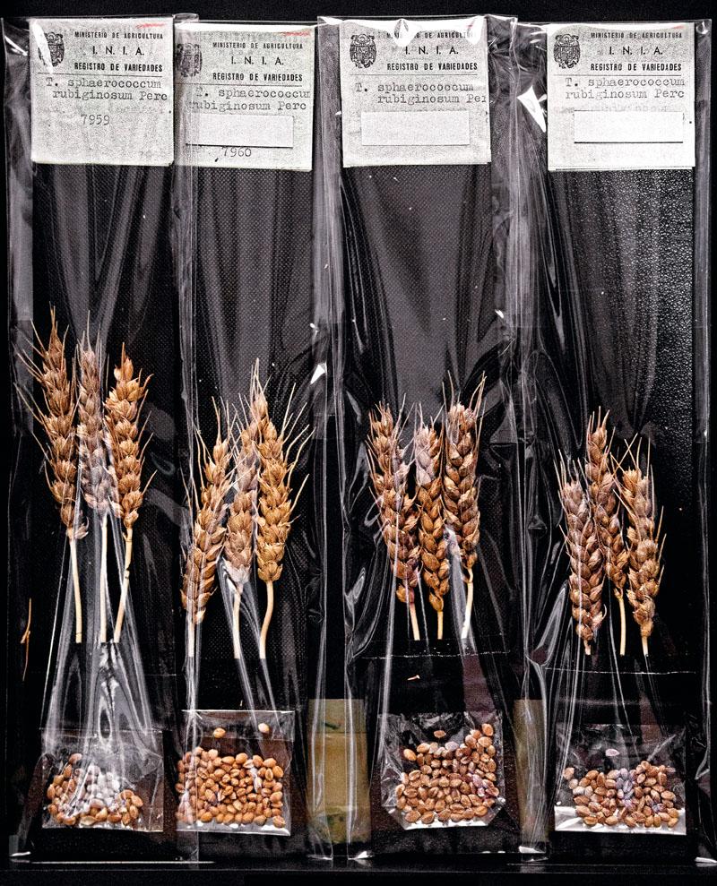 conocer, biologia, cultivos, agricultores, semillas, xlsemanal