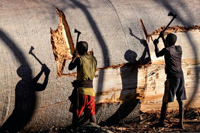 BAOBAB MADAGASCAR PASCAL MAITRE, xlsemanal (1)