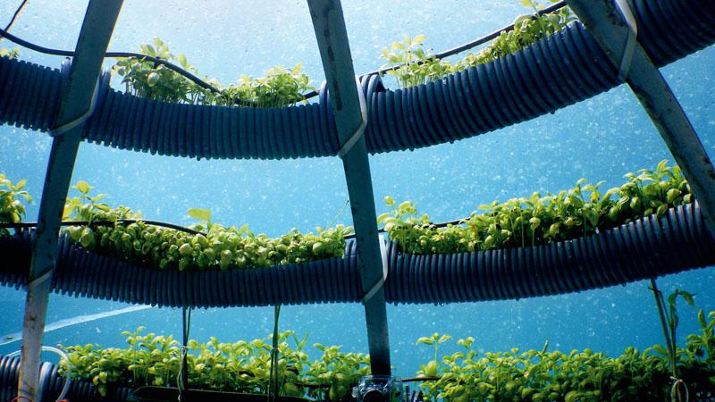 conocer, naturaleza, tomates en el fondo del mar, xlsemanal (1)