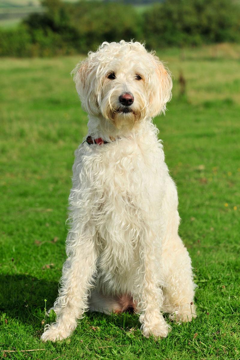 conocer, perros, cruces, enfermedades, veterinario, xlsemanal