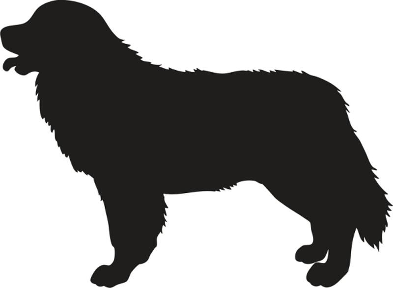 cruce de perros