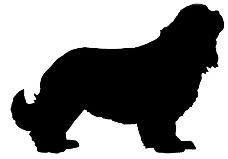 perros cruce, xlsemanal