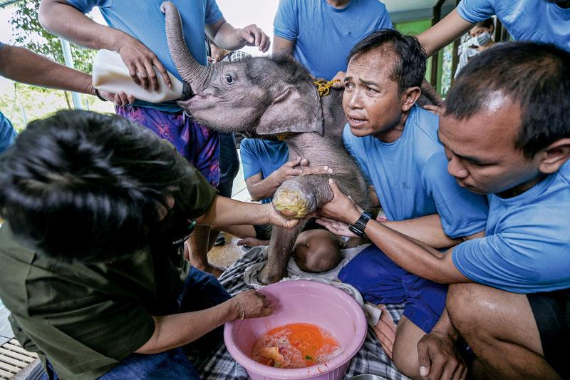 conocer, naturaleza, terapia para elefantes en tailandia, xlsemanal