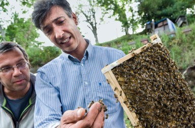 Paulo Gonçalves, apicultor criador de abejas Buckfast genéticamente mejoradas por selección natural /Paulo Gonçalves, beekeeper breeding Buckfast genetically improved by natural selection