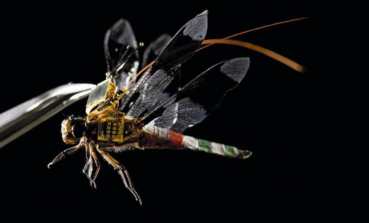 conocer, ciencia, mitad libelula mitad dron, xlsemanal