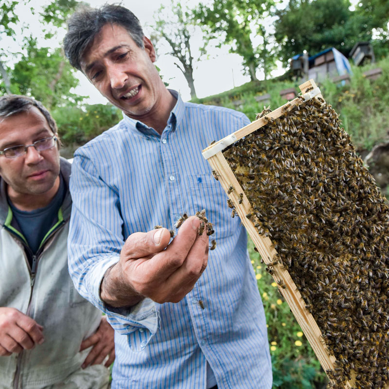 conocer, naturaleza, abejas peligro, cientificos e informaticos unidos, xlsemanal