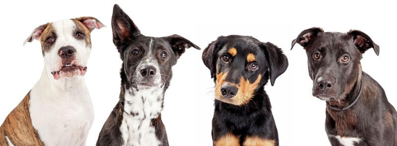 conocer, naturaleza, en que piensa nuestra perro, ciencia, xlsemanal