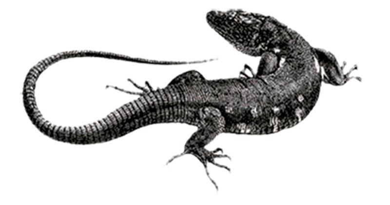 conocer, naturaleza, xlsemanal, especies por descubrir