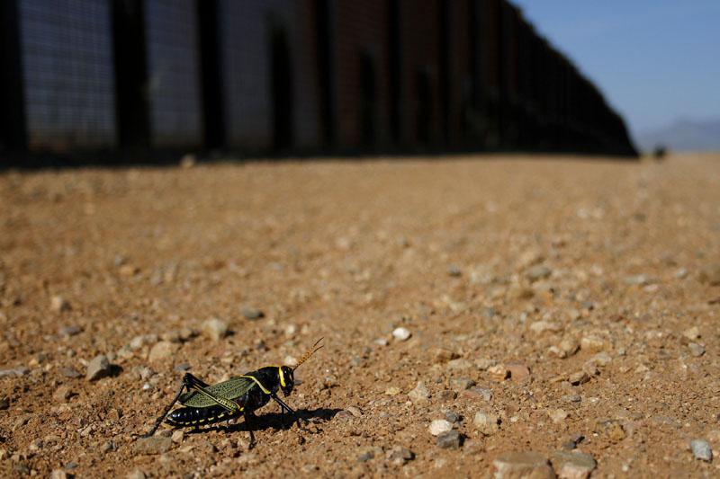 conocer, naturaleza, fauna, animales, extincio, muro trump, xlsemanal