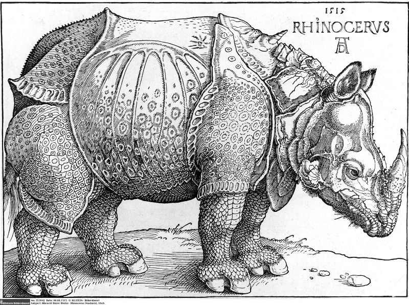 rinoceronte ilustracion Durero conocer naturaleza