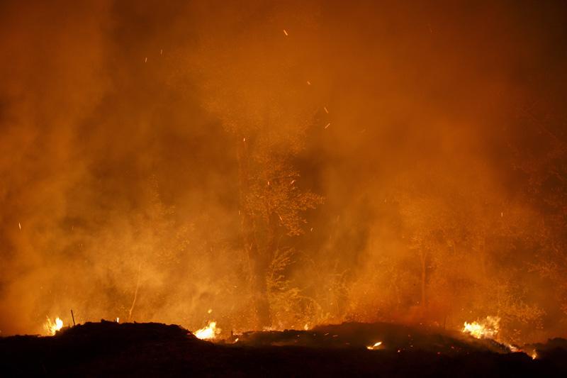 Conocer naturaleza, incendios, Galicia