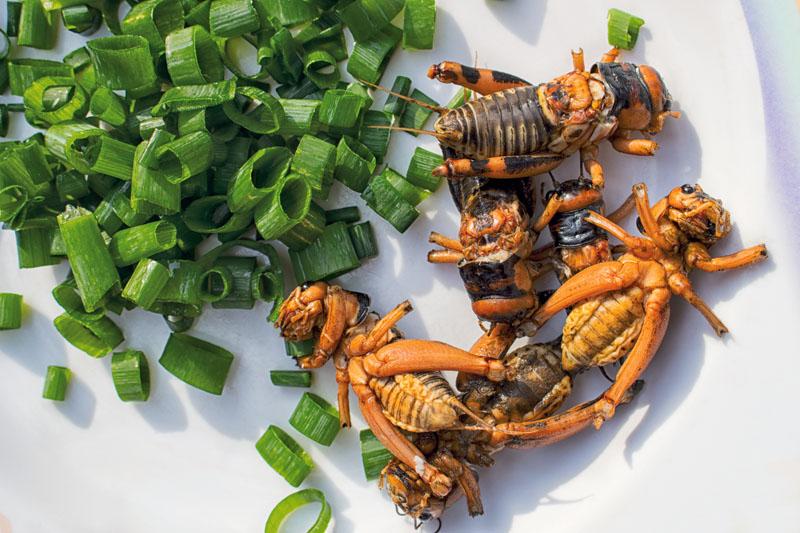 estilo de vida, gourmet, insectos, xlsemanal