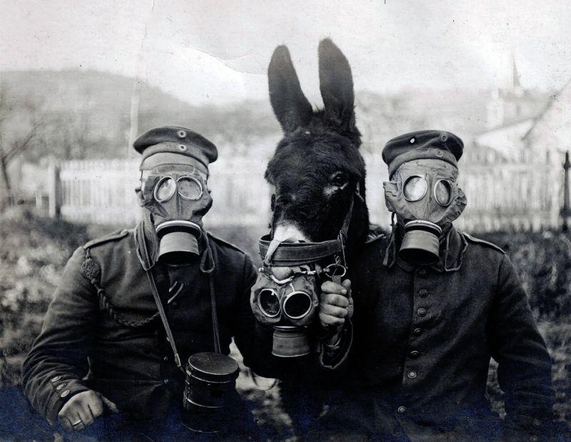 Conocer historia armas quimicas primera guerra mundial