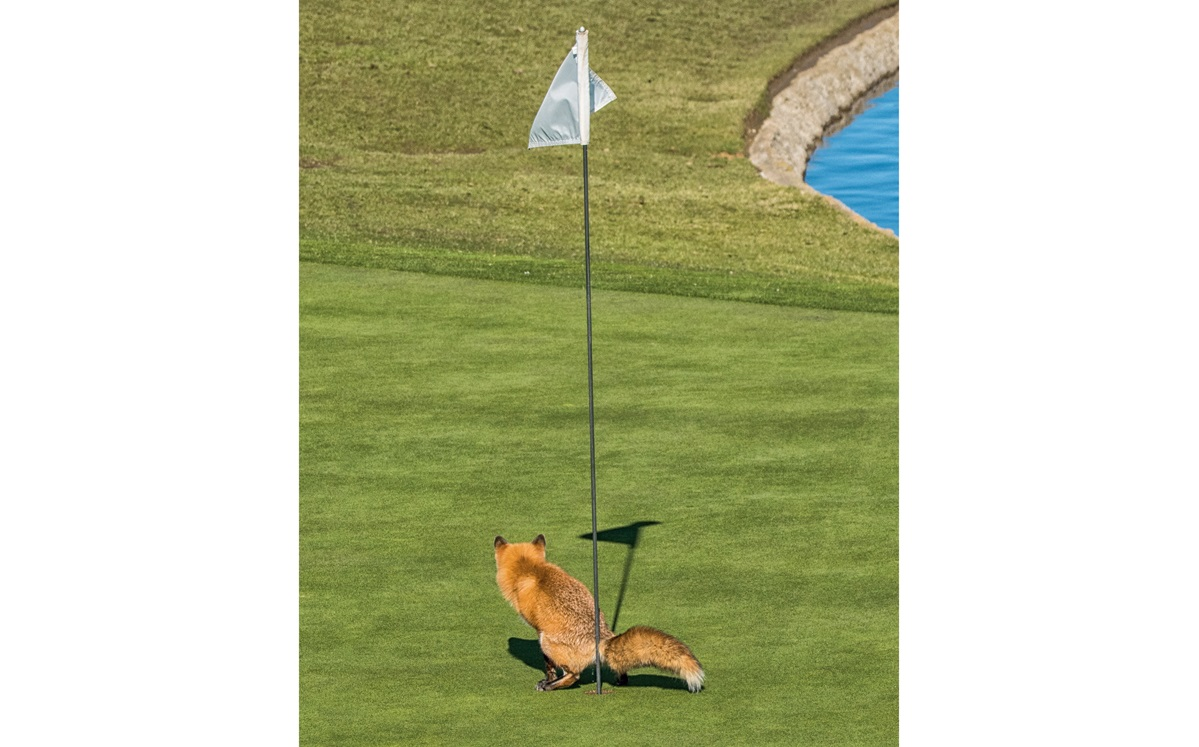 The Comedy Wildlife Photography Competition 
