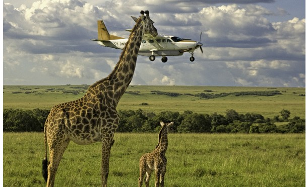 The Comedy Wildlife Photography Awards 2017 Graeme Guy George Town Malaysia  Title: Outsourcing seatbelt checks Caption: Outsourcing seatbelt checks Description: Masai Mara airstrip with a plane landing 'below' giraffe height. Animal: Giraffe Location of shot: Masai Mara Kenya