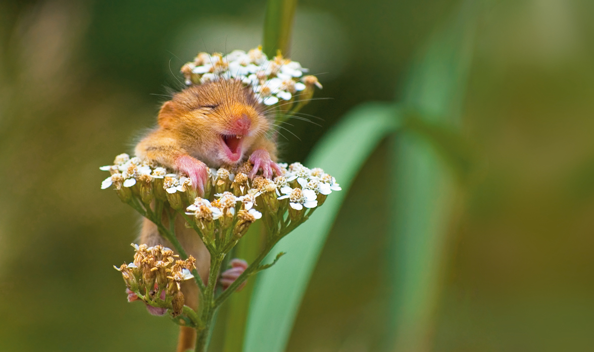 The Comedy Wildlife Photography Awards 2017