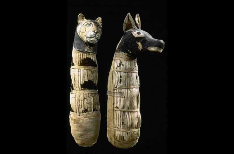Millones De Animales Fueron Enterrados Con Los Faraones