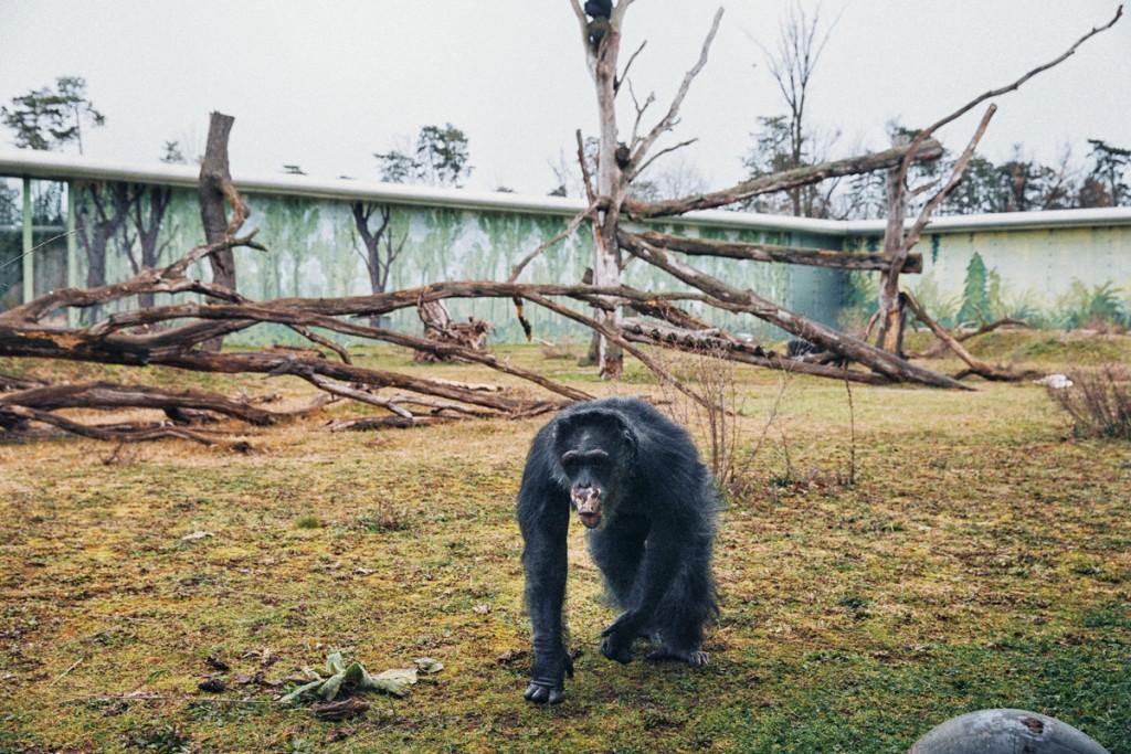 mono de laboratorio