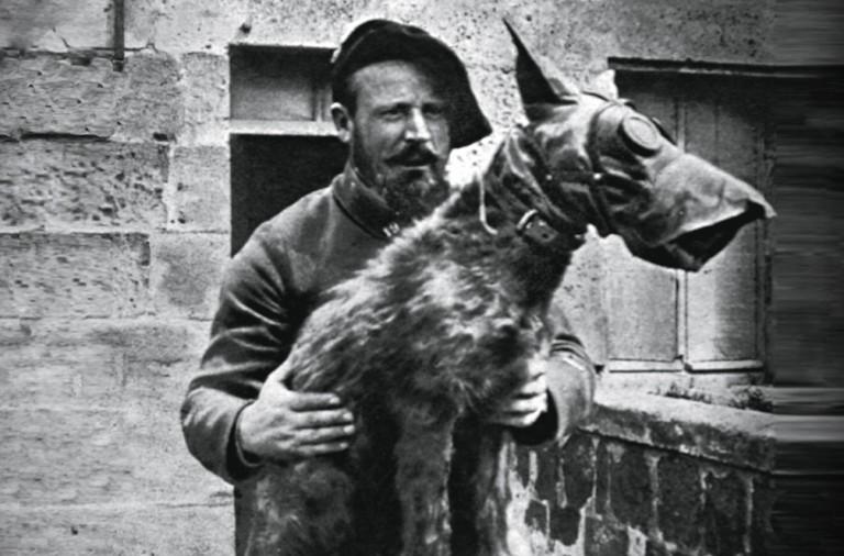 Perros En La Primera Guerra Mundial Soldados De Cuatro Patas