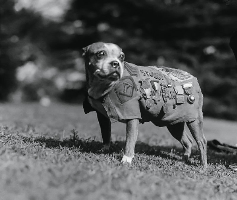 perros primera guerra mundial, centenario