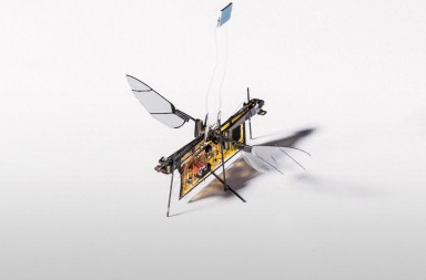 Team Robofly gets a group photo and shows off their minute robotic bug