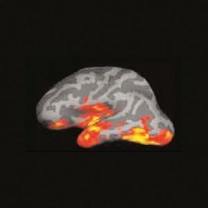 partes del cerebro activo cuando lees (1)