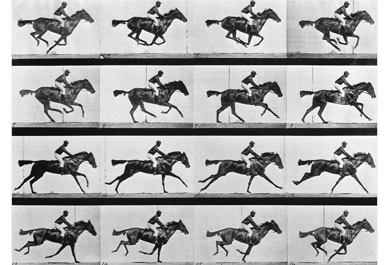 historia del caballo trote