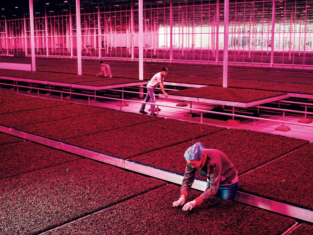 holanda agricultura sostenible 2