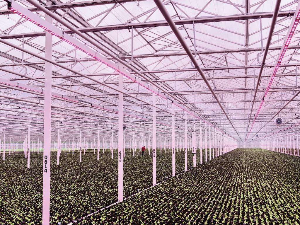 holanda agricultura sostenible 4