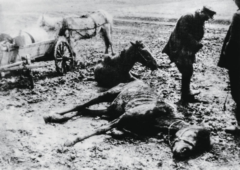 Dead and dying horses near a Belgorod collective farm during the man-made Holodomor famine in the Ukraine, former Soviet Union, 1934. (Photo by Daily Express/Hulton Archive/Getty Images)
