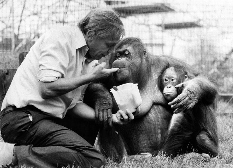 David Attenborough naturalista documentales