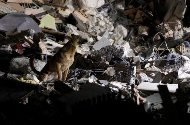 animales terremotos