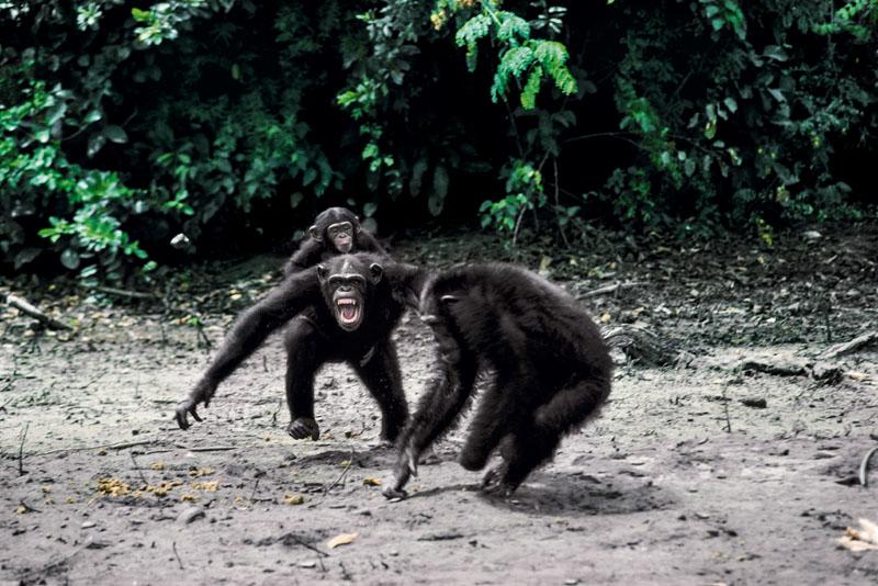 antropologia evolucion ser humano, homo sapiens
