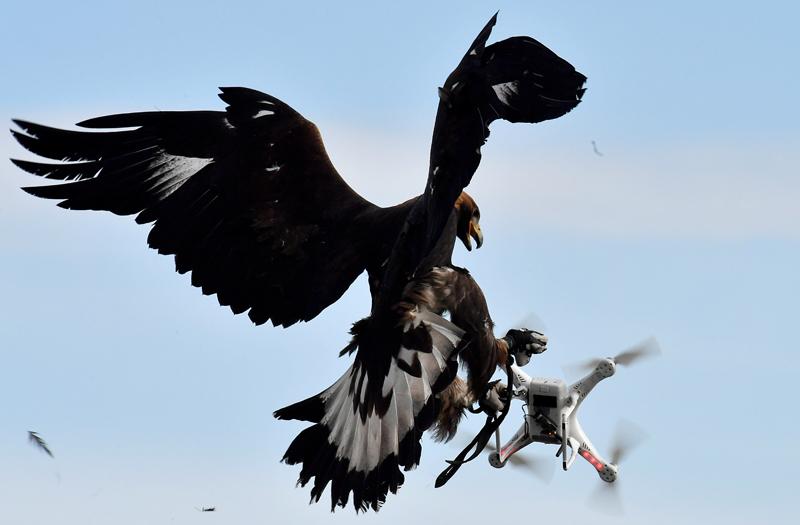 drones legislacion cazar