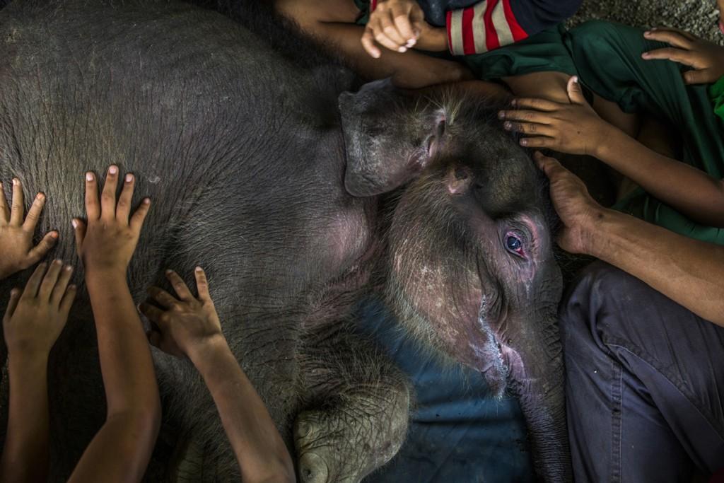 elefante Birmania