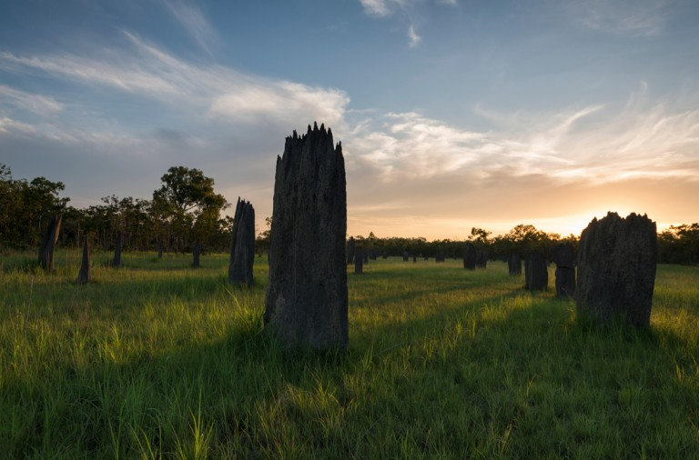 Magnetic Termite Mounds at sunset in Litchfield National Park. The compass termite (Amitermes meridionalis and A. laurensis) bui