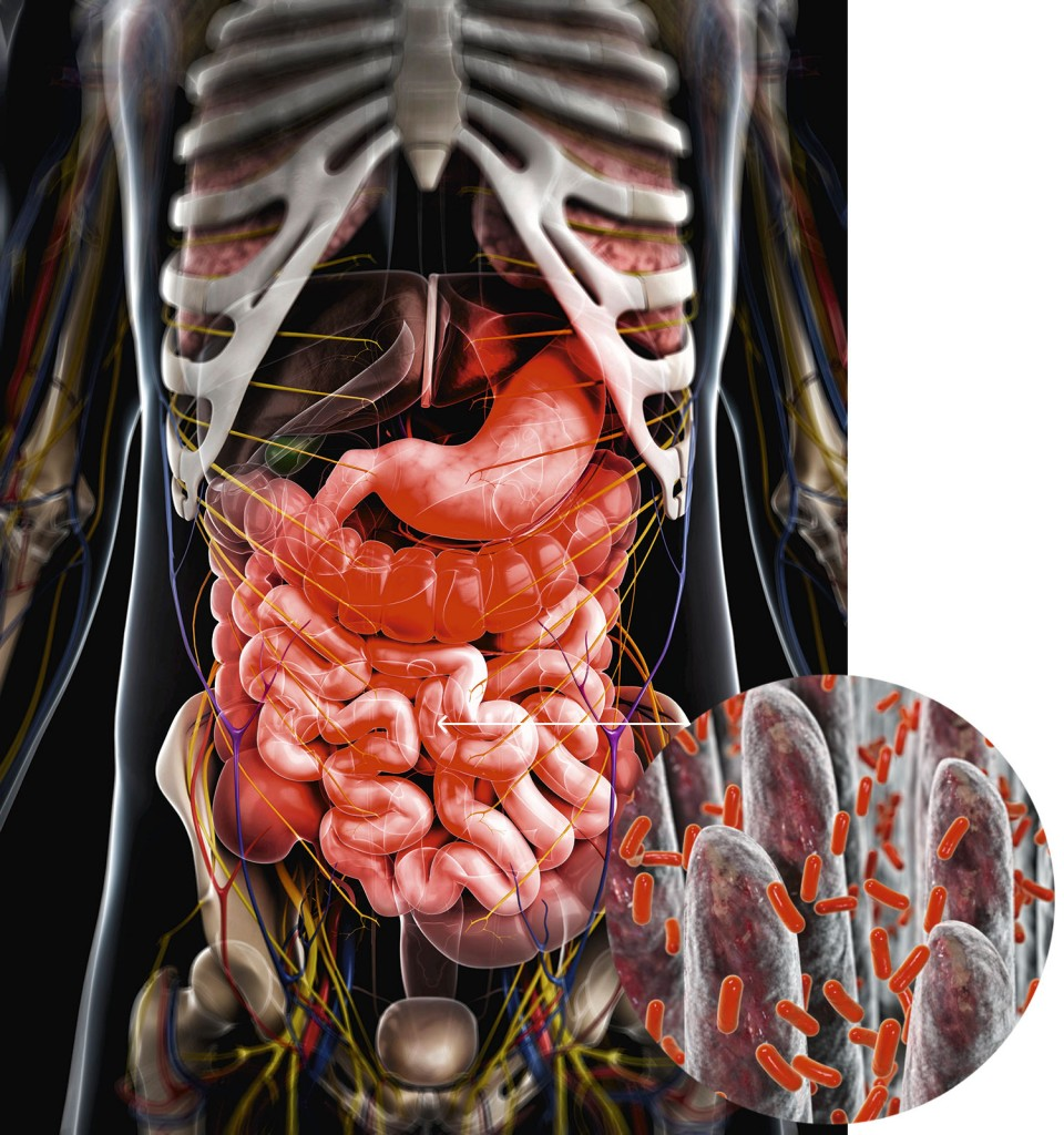 intestino -MICROBIOTA