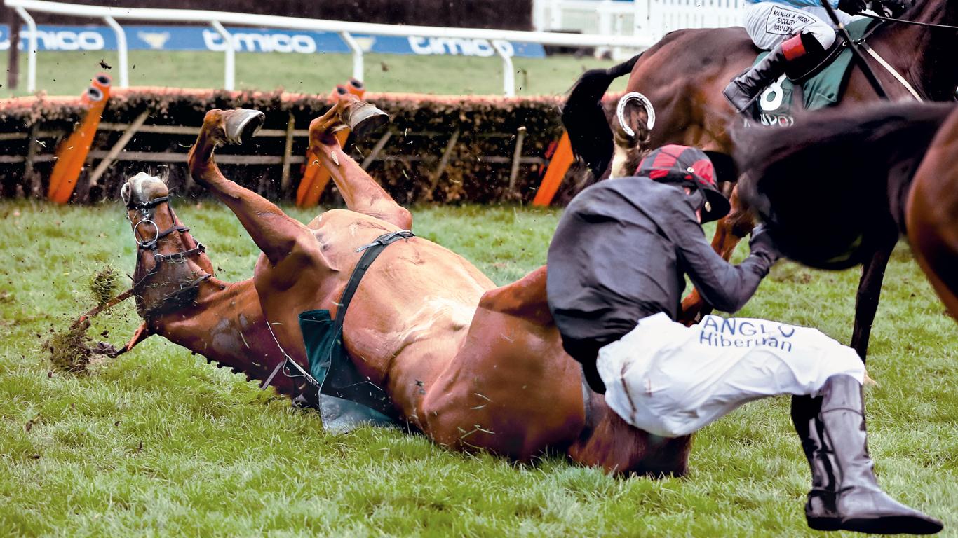¿Por qué mueren tantos caballos de carreras?