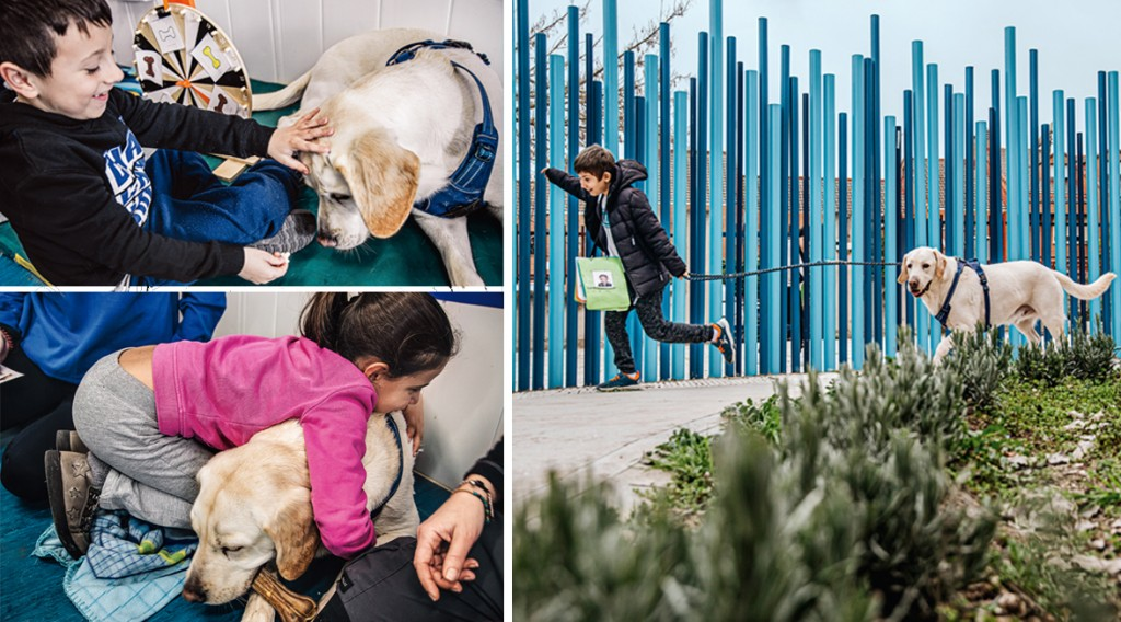 Perros y niños con autismo 8